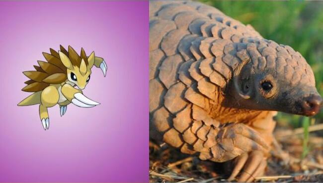 pokemons baseados em animais reais 05