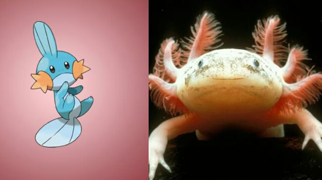 pokemons baseados em animais reais 07