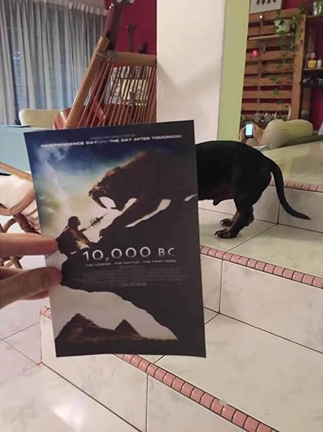 animais de estimacao capas de dvd 01