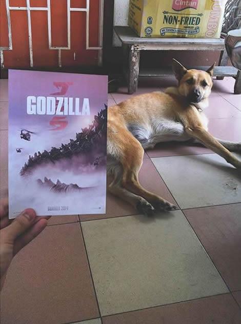 animais de estimacao capas de dvd 02