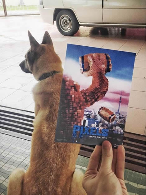 animais de estimacao capas de dvd 03