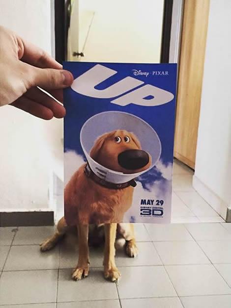 animais de estimacao capas de dvd 04