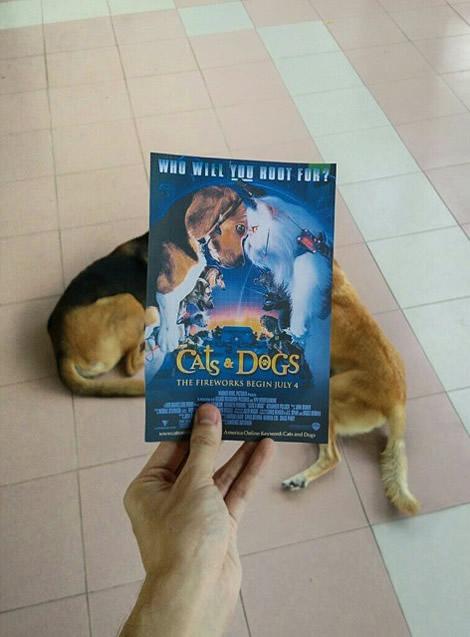 animais de estimacao capas de dvd 05