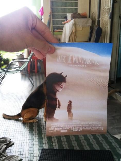 animais de estimacao capas de dvd 06