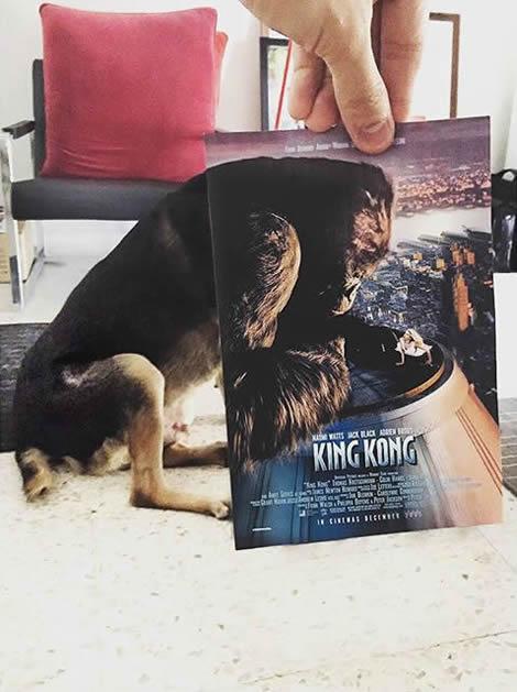 animais de estimacao capas de dvd 07