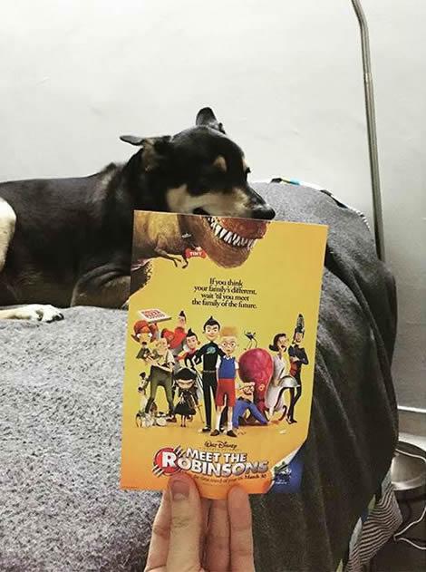 animais de estimacao capas de dvd 09