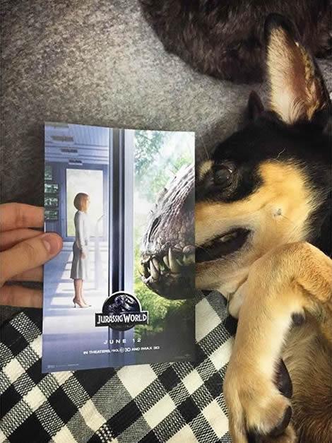 animais de estimacao capas de dvd 10